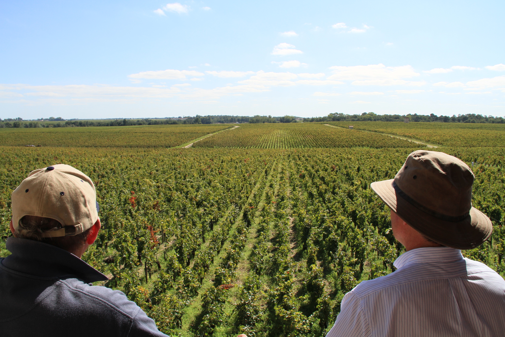 Still of The Vines in Pamisimas del vyno (2013)