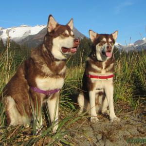 Skadi and Freya with Russell josh Peterson Eagle Beach Juneau Alaska. Thank you for your Kindness and Support. Please click
