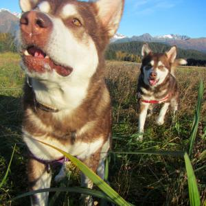 Skadi & Freya with Russell Josh Peterson Eagle Beach Juneau Alaska. Thank you for your Kindness and Support. Please click