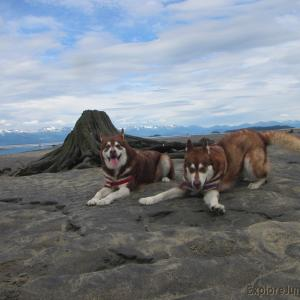 We All Have That One Special Friend, or Two. Skadi & Freya with Russell Josh Peterson ~ Eagle Beach Juneau Alaska Thank you for your Kindness and Support.