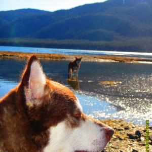 Sheep Creek Alaska - Three 4 Love Skadi & Freya and Me! Thank you for your kindness and support. Please click thru > the photos and Like all that you enjoy! Check out our Demo Reels too!