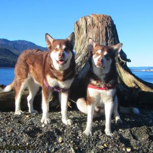 Skadi & Freya - Juneau Alaska. Thank you for your Kindness and Support! Please click