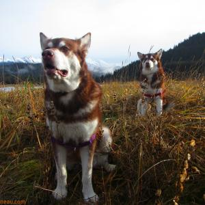 Skadi & Freya with Russell Josh Peterson at Eagle Beach, Juneau Alaska ~ Thank you for clicking