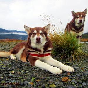Freya (Herself) and Skadi with Russell Josh Peterson @ Sheep Creek, Juneau Alaska. Thank you for your Kindness and Support please click Like on each photo and demo reel you enjoy!