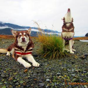 Put the WOOoo in I LOVE YOU! Freya and Skadi with Russell Josh Peterson @ Sheep Creek, Juneau Alaska. Thank you for your Kindness and Support please click Like on each photo and demo reel you enjoy!
