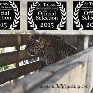 International Film Festival of St Tropez Nominations
